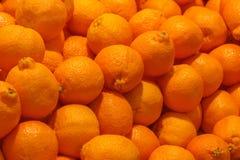 堆橙色柑桔果子或minneola橘栾果 免版税库存图片