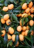 堆橙色玛丽亚李子和深绿叶子覆盖物,在其他名字是李子芒果或gandaria 免版税库存图片