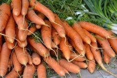 堆橙色红萝卜 库存照片