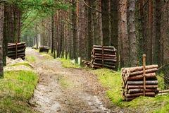 堆沿路的击倒的杉树树干在常青具球果森林里 免版税库存照片