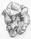 堆海壳-铅笔剪影 库存图片