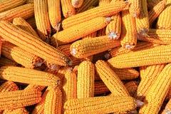 堆玉米 免版税图库摄影
