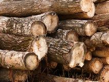 堆白扬树 免版税库存图片