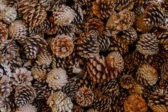 堆的杉木锥体是相同的 库存图片