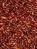 堆的特写镜头斑豆 从未加工的红豆的背景 免版税图库摄影