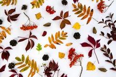 堆秋叶,杉木锥体胡说的结束白色背景 从秋天的汇集美好的五颜六色的叶子边界 免版税库存照片