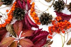 堆秋叶,杉木锥体胡说的结束白色背景 从秋天的汇集美好的五颜六色的叶子边界 库存图片