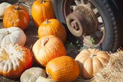 堆秋天南瓜和老生锈的古色古香的轮胎 库存照片