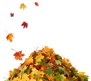 堆秋天叶子 免版税图库摄影