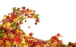 堆秋天槭树上色了叶子 免版税图库摄影