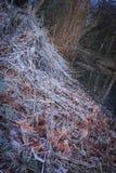 堆积秸杆、干用白色霜盖的叶子和植物 库存照片