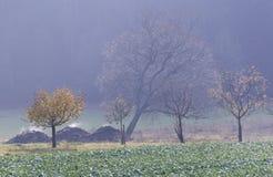 堆积肥料蒸 库存照片