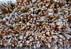 堆稀薄的结冰的木头 库存图片