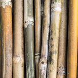 堆竹茎 库存照片