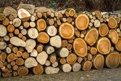 堆自然木日志 图库摄影