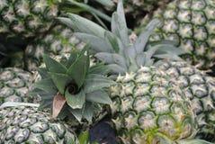 堆菠萝果子或凤梨comosus 库存照片