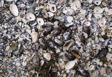 堆蚝壳在鳕鱼角的Wellfleet马萨诸塞 库存图片