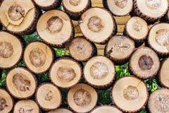 堆被削减的木树桩日志纹理 免版税库存照片