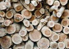 堆被剪切的木树桩 免版税库存图片