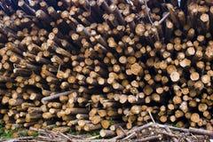 堆被堆积的木头 免版税图库摄影