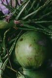 堆被放弃的椰子果壳 免版税库存图片