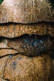 堆被放弃的椰子果壳 免版税图库摄影