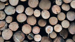 堆被锯的木材 库存图片
