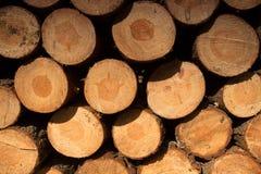 堆裁减和被堆积的杉木树干,背景 免版税图库摄影