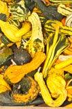 堆黄色和绿色金瓜 免版税库存图片
