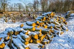 堆击倒的树干在冬天森林里 库存图片