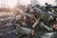 堆击倒的树 库存照片