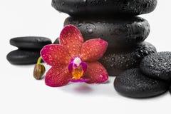 堆黑禅宗石头和红色兰花,兰花植物 图库摄影