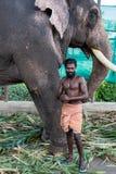 堡垒高知,印度- 2017年11月16日:一头俘虏大象,与iots Mahout,保留为使用在印度仪式在堡垒科钦Indi 免版税库存图片