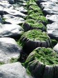 堤堰向荷兰扔石头 免版税库存照片