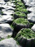堤堰向荷兰扔石头 库存照片
