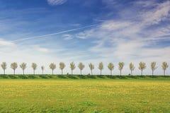 堤堰的摩托车骑士与树行在贝姆斯特尔Pold 免版税图库摄影