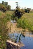堤沼泽 库存图片