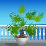 堤防和一棵棕榈树在罐 免版税库存图片
