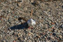 堤防在市费奥多西亚 免版税图库摄影