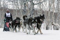 堪察加拉雪橇狗赛跑:猎狗雪撬队阿拉斯加的爱斯基摩 免版税库存图片