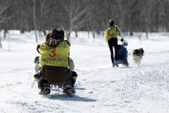 堪察加拉雪橇狗赛跑Beringia,俄国杯拉雪橇狗赛跑雪学科 库存图片