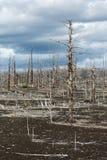 堪察加无生命的沙漠风景:死的木头(扎尔巴奇克火山卷 免版税库存照片