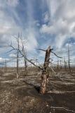 堪察加无生命的沙漠风景:死的木头(扎尔巴奇克火山卷 免版税图库摄影