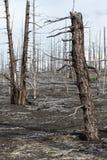 堪察加无生命的沙漠风景:死的木头(扎尔巴奇克火山卷 免版税库存图片