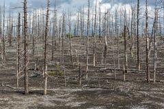 堪察加无生命的沙漠风景:死的木头(扎尔巴奇克火山卷 库存图片