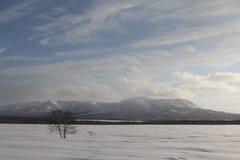 堪察加,山,寒带草原, Sobolewski地区 图库摄影