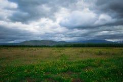 堪察加 绿色领域和火山 松鸡爱本质歌曲通配木头 库存图片