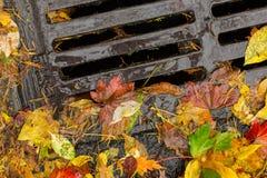 堵塞街道流失的多色的叶子 库存图片