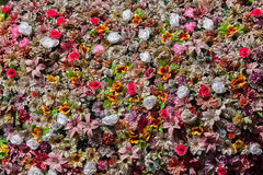 塑料五颜六色的花 木背景详细资料老纹理的视窗 免版税库存照片