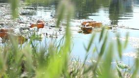 塑料反对污染 股票视频